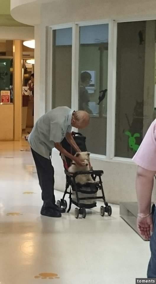 Ông chăm sóc cho chú chó bị thương nặng.