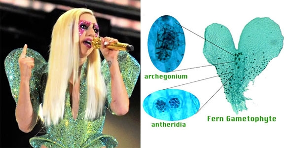 """Các nhà khoa học tại Đại học Duke đã được truyền cảm hứng sau khi nhìn thấy bộ trang phục của Lady Gaga tại lễ trao giải Grammy năm 2010. Nó trông giống như một phần (gọi là giao tử) của loài dương xỉ. Họ đã quyết định đặt tên cho hai chi mới của dương xỉ là Gaga germanotta và Gaga monstraparva (có nghĩa là """"quái vật nhỏ""""). """"Chúng tôi muốn đặt cho các chi này theo tên Lady Gaga bởi vì lòng nhiệt thành của cô ấy trong việc bảo vệ sự bình đẳng và biểu hiện cá nhân"""", nhà sinh vật học Kathleen Pryer chia sẻ."""