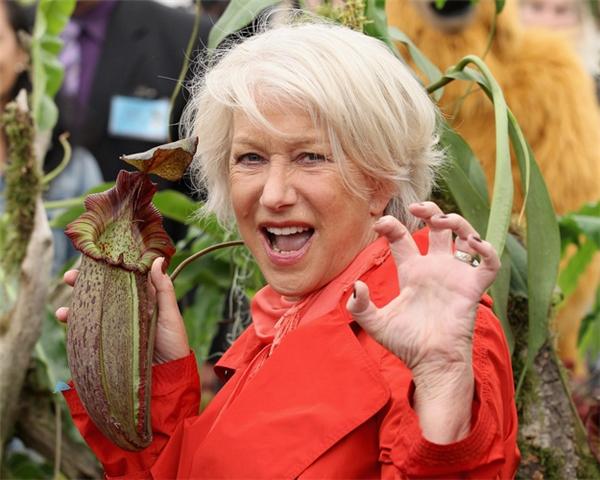 Loại cây rừng ăn thịt Nephenthes được đặt tên theo tên của diễn viên gạo cội Helen Mirren vào năm 2011.