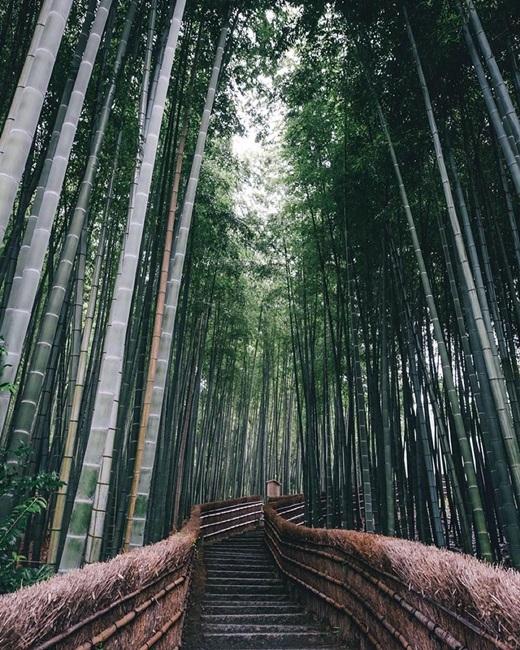 Một cầu thang bí mật nằm ẩn giữa rừng tre xanh mướt như dẫn đến chốn bồng lai tiên cảnh nào đó. (Nguồn: Bored Panda)