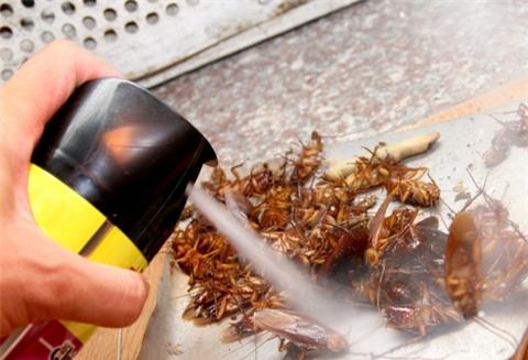 Nguy hại chết người do xịt thuốc diệt côn trùng sai cách