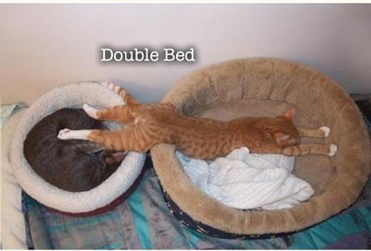 Một khi anh đã ngủ thì phải làgiường đôi mới được nha.(Nguồn: 9gag)