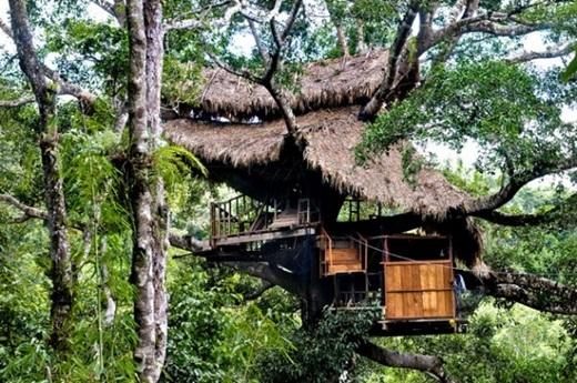 Ngôi nhà cây có tên Gibbon Experience quả thật là một tuyệt tác. (Nguồn: Internet)