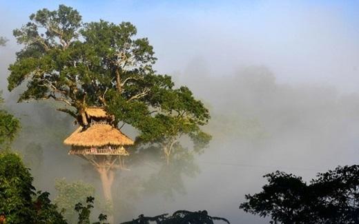Với những ngôi nhà được xây cao tít trên ngọn cây, du khách có thể từ đó trông ra cảnh quan tuyệt đẹp của núi rừng.(Nguồn: Internet)