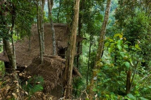 Nhà cây Terra ẩn mình trong cao nguyên Cameron.(Nguồn: Internet)