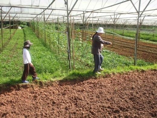 Thu hoạch nông sản sạch ở trang trại sẽ làm bạn bận rộn lắm đấy.(Nguồn: Internet)