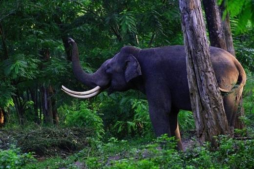 Du khách có thể đến thăm vườn hoang dã Muthanga để chơi đùa với những chú voi.(Nguồn: Internet)