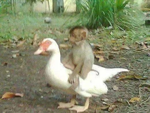 Sinh ra là bạn... (Nguồn: Facebook)