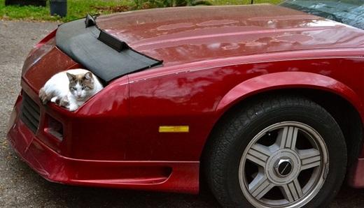 """""""Còn ai dám nói đây không phải là xe của anh nữa đi"""".(Nguồn: viralnova.com)"""