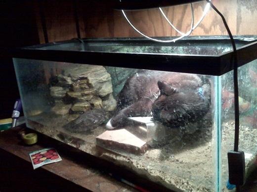 """""""Em là nàng tiên cá bé nhỏ ngủ quên trong một cái hồ cá cũ kĩ..."""" .(Nguồn: viralnova.com)"""
