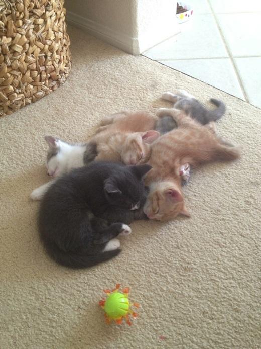 Ngủ vầy nó mới ấm.(Nguồn: viralnova.com)