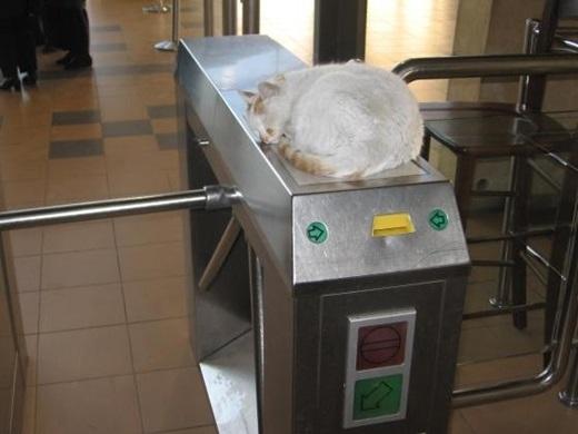 Nên sa thải nhân viên gác cổng vô trách nhiệm này ngay và luôn.(Nguồn: viralnova.com)