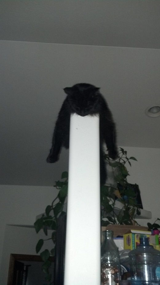"""""""Hù... mèo khinh công đây"""".(Nguồn: viralnova.com)"""