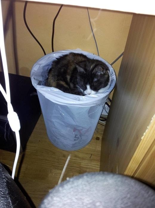 """Và cuối cùnglà """"thánh thùng rác"""".(Nguồn: viralnova.com)"""