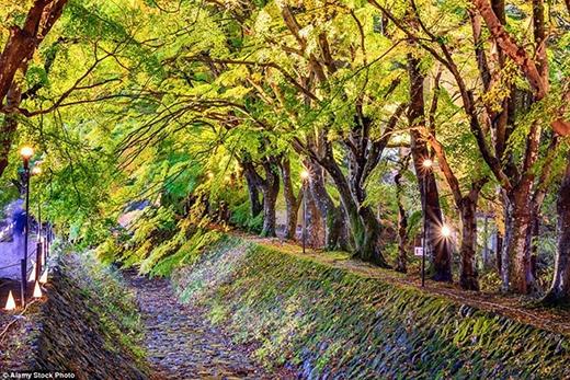 Ngất ngây những con đường rợp bóng cây đẹp nhất thế giới