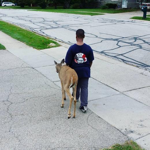 Chú bé dẫn nai mù qua đường. (Ảnh: Reddit)