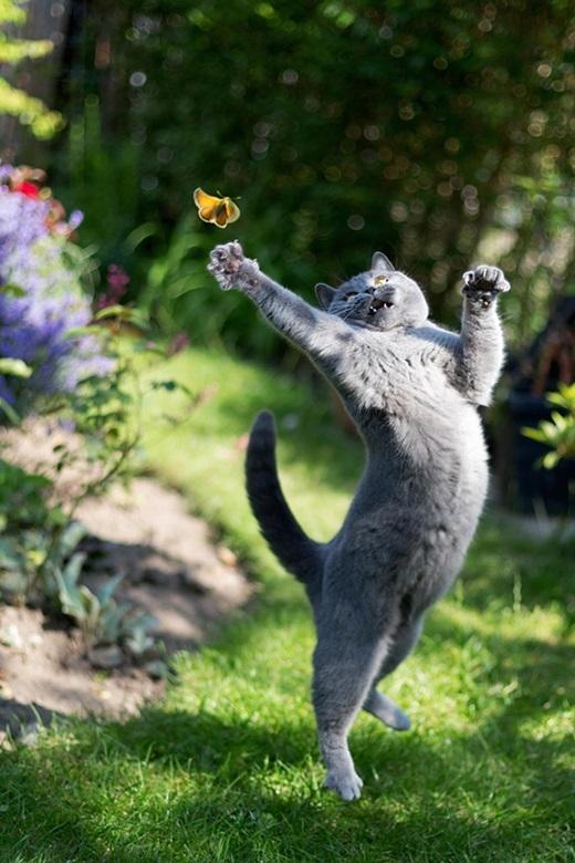 """""""Meolà mèo cung Bò Cạp. Một khiđã đụng tới sự tò mò và kích thích của Meothì..."""". (Nguồn: 9gag)"""