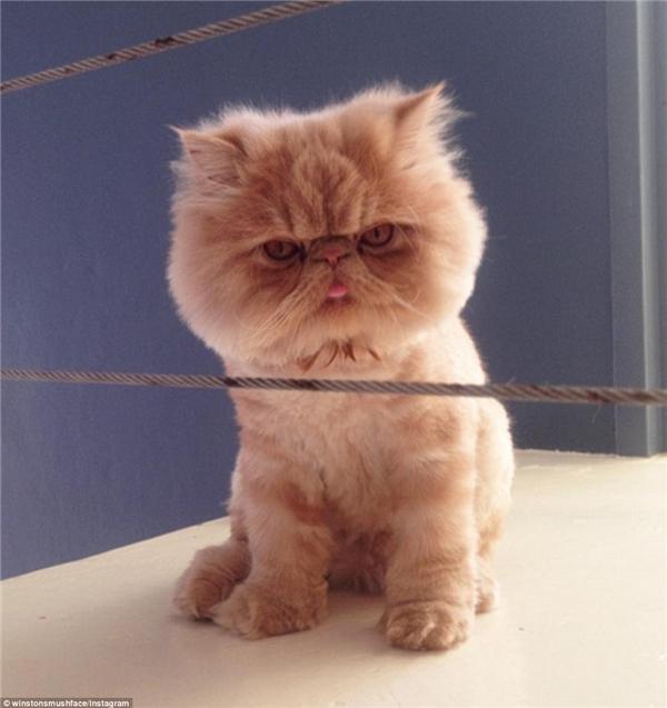 Có lẽ Hollywood sẽ là điểm dừng chân tiếp theo của chú mèo này ngay khi kịch bản phim của nhóm Nick Atkins được hình thành.(Nguồn: Daily Mail)