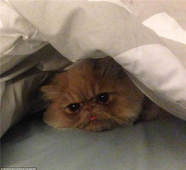 Không có chu kì đăng tải ảnh cố định, bạn sẽ phải hồi hộp chờ mỗi ngày xem chú mèo thè lưỡi này có ảnh mới không đấy.(Nguồn: Daily Mail)