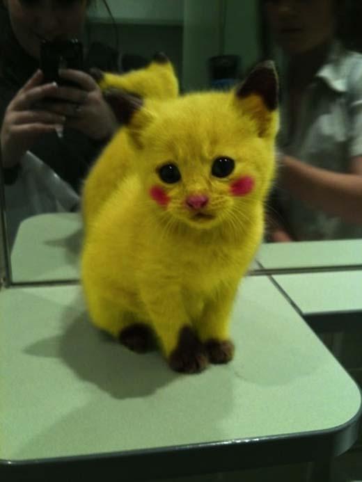 Pikachu phiên bản đời thực nè. (Nguồn: Internet)