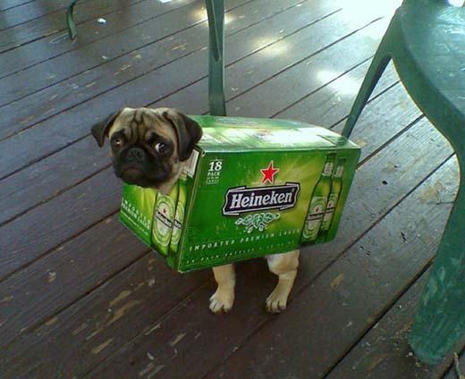 Tiết kiệm được tiền trang phục cho cún đi chơi Halloween.(Nguồn: Internet)