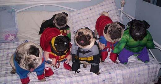 Gia đình siêu nhân tụ họp đông đủ ghê ta.(Nguồn: Internet)