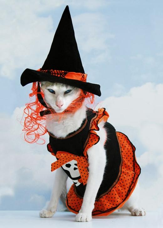Nàng mèo phù thủy đỏm dáng.(Nguồn: Internet)