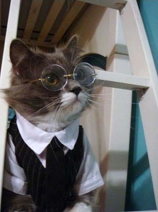 Harry Potter biến hình.(Nguồn: Internet)