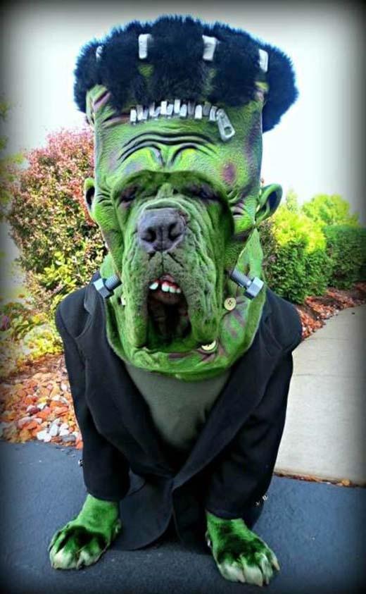 Ồ hô! Độ giống với anh chàng khổng lồ xanh Hulk: 99%.(Nguồn: Internet)