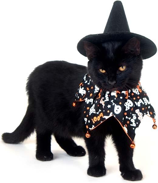 Những chú mèo đen rất thích hợp cho lễ hội Halloween thêm huyền bí.(Nguồn: Internet)