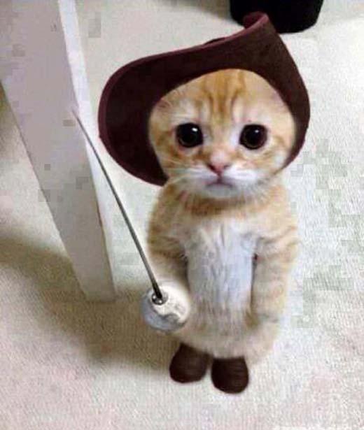 Chú mèo Đi-hia vô (số) tội nhưng lúc nào cũng trưng gương mặt đáng yêu.(Nguồn: Internet)
