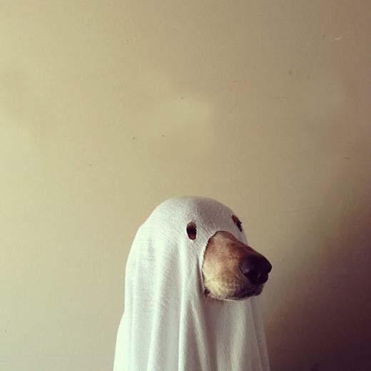 Tôi thấy một con chó muốn biến thành ma... nhưng thất bại.(Nguồn: Internet)