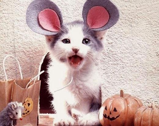 Nhà tôi có nuôi một con mèo nhưng nó cứ tưởng nó là chuột.(Nguồn: Internet)