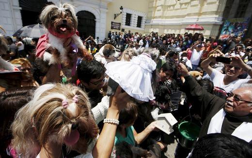 Lễ hội thú cưng Saint Francis of Assisi ở bên ngoài nhà thờ San Francisco, trung tâm thành phố Lima, Peru. (Ảnh: Mariana Bazo)