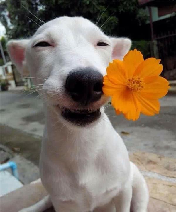 Hoa cũng không đẹp bằng nàng ta.