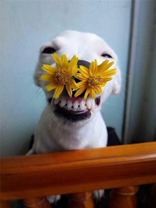 Cười hở 10 cái răng.