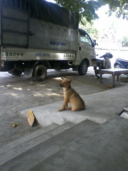 Chú chó đáng thương và đôi mắt buồn thảm. (Nguồn: Internet)