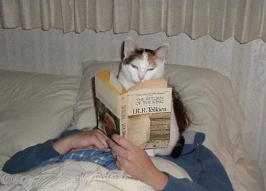 Chú mèo này biết ngồi chễm chệ trên mình chủ vàđọc sách.(Nguồn: BuzzFeed)