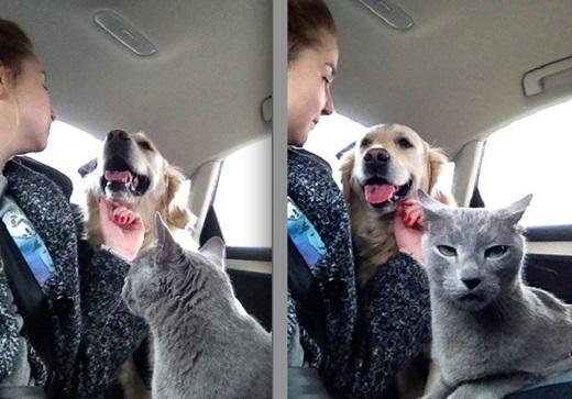 """""""Nhìn mặt tôi xem có cần được nựng nịu như thú cưng không?"""".(Nguồn: BuzzFeed)"""