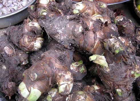 Những củ khoai sọ thơm ngon đặc biệt không lẫn vào đâu của Mộc Châu. (Ảnh: Internet)