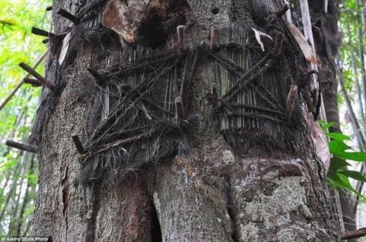 """Theo thời gian, những cây này sinh trưởng và """"ngôi nhà"""" đó cũng sẽ biến mất. (Ảnh: Internet)"""