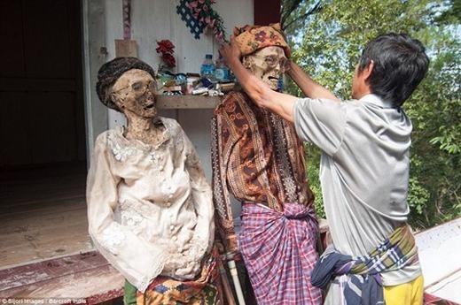 Rùng rợn hơn, người Tarajan còn có một tục lệ mang tên Ma'Nene. Cứ 3 năm mộtlần, người thân lại đào mộ, lấy xác rồi tắm, mặc quần áo, trang điểm và cho người chết diễu hành quanh làng. Đây là hành động mà theo họ là để tưởng nhớ người đã khuất. (Ảnh: Internet)