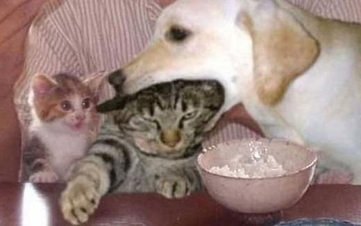 """""""Đồ ngốc, chén đồ ănở trước mặt mi đấy, đầu mèokhông phải là đồ ăn, hiểu không hả?"""". (Nguồn: Internet)"""
