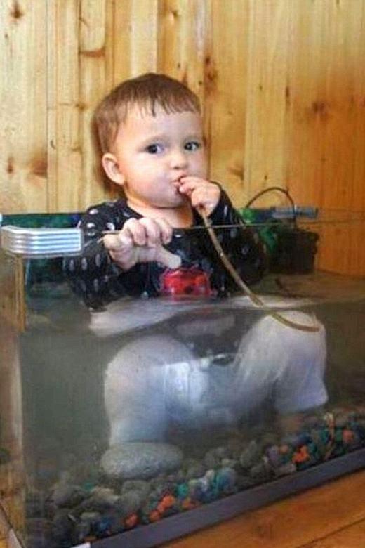 """""""Ta là cá cảnh, có ai thấy ta 'chảnh'không?"""". (Ảnh: Internet)"""