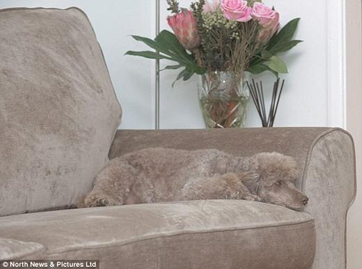 Thật không ngờ cô chủ mua cái ghếsô-pha hợp rơ màu đến vậy!(Nguồn: Internet)