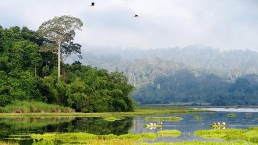 Được UNESCO công nhận là khu dự trữ sinh quyển của thế giới, Nam Cát Tiên không khiến những người yêu thiên nhiên hay đang tìm kiếm cơ hội gần gũi với thế giới tự nhiên thất vọng,bởi cảnh sắc xanh tươi với nhiều loài động thực vật đa dạng.(Nguồn: Internet)
