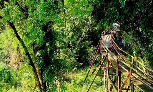 Một cây cầu gỗ nằm lẩn khuất giữa rừng cây.(Nguồn: Internet)