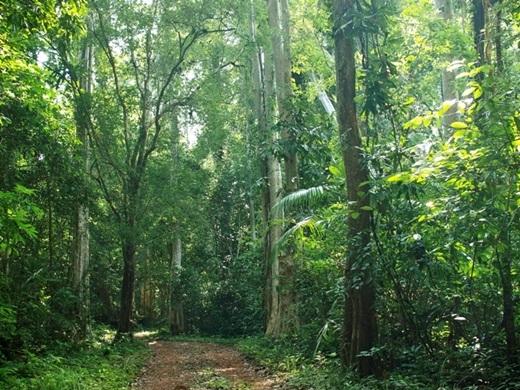 Những cây tùng, thiên tuế hàng trăm năm tuổi hay đang đợi bạn trên đường đi.(Nguồn: Internet)
