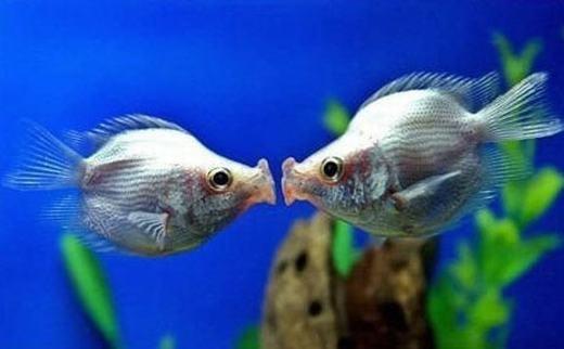 """""""Hình nhưcó người đang nhìn trộmchúng ta hôn nhau anh yêuạ!"""" (Ảnh: Internet)"""