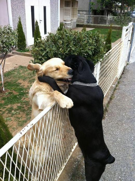 Tình yêumìnhkhông gì chia tách...trừ cái hàng rào đang ngăn cách mà thôi. (Ảnh: Internet)